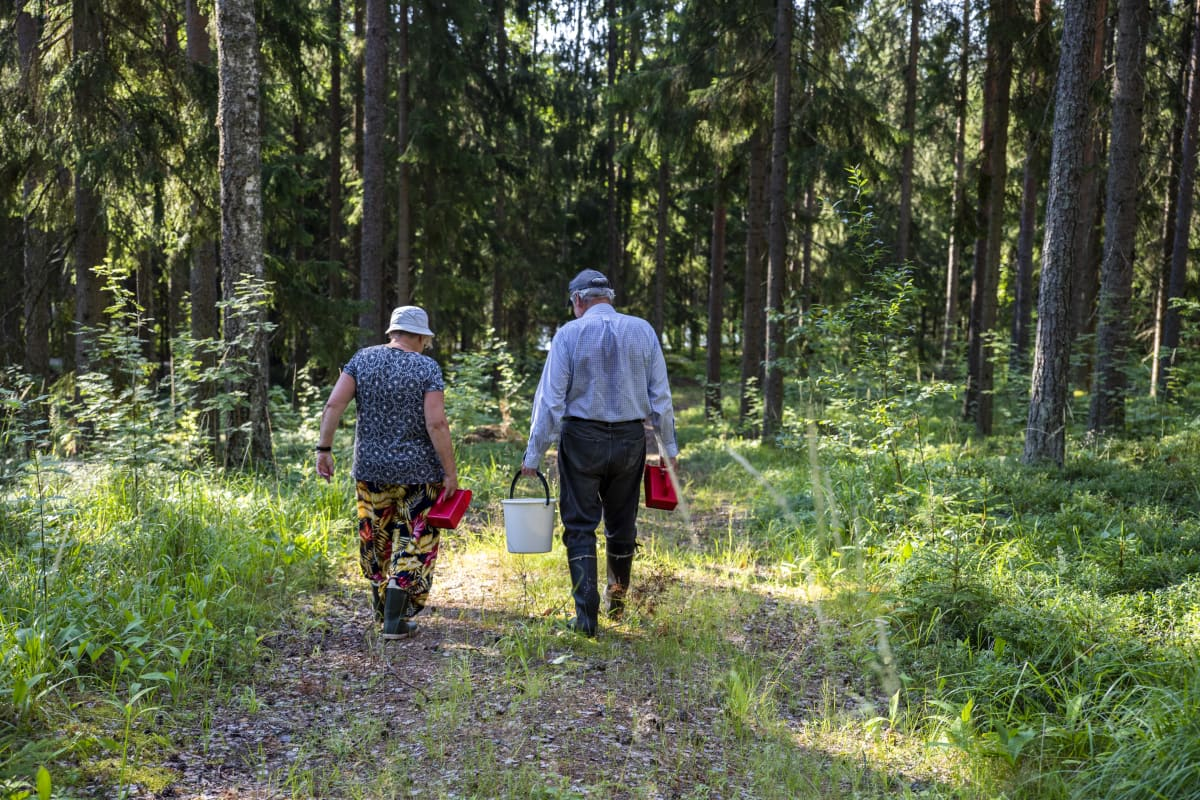 kaksi mustikanpoimijaa kävelee metsätiellä