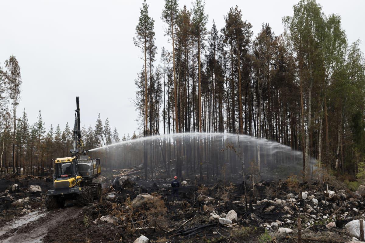 Laite ruiskuttaa vettä metsään.