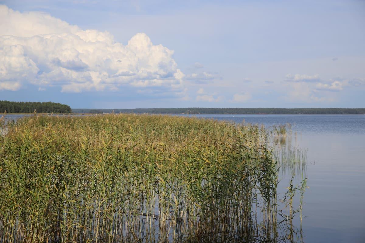 Merimaisema Virolahdella Keisarin huvipuiston lähettyvillä.
