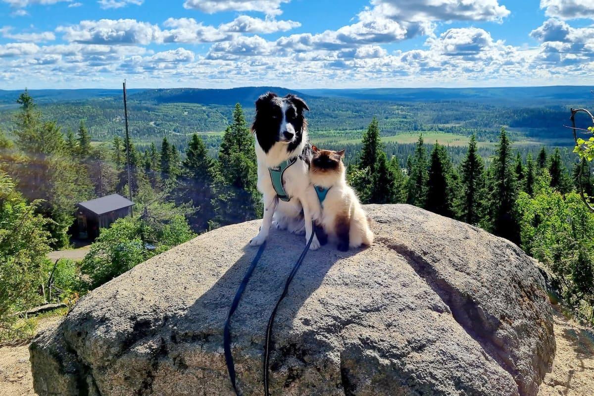Reissukissa Pessi ja Aapa-koira Syötteen huipulla Pudasjärvellä.