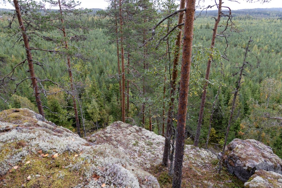 Rautjärven Linnavuoren huipulta avautuu näköalat Venäjälle.