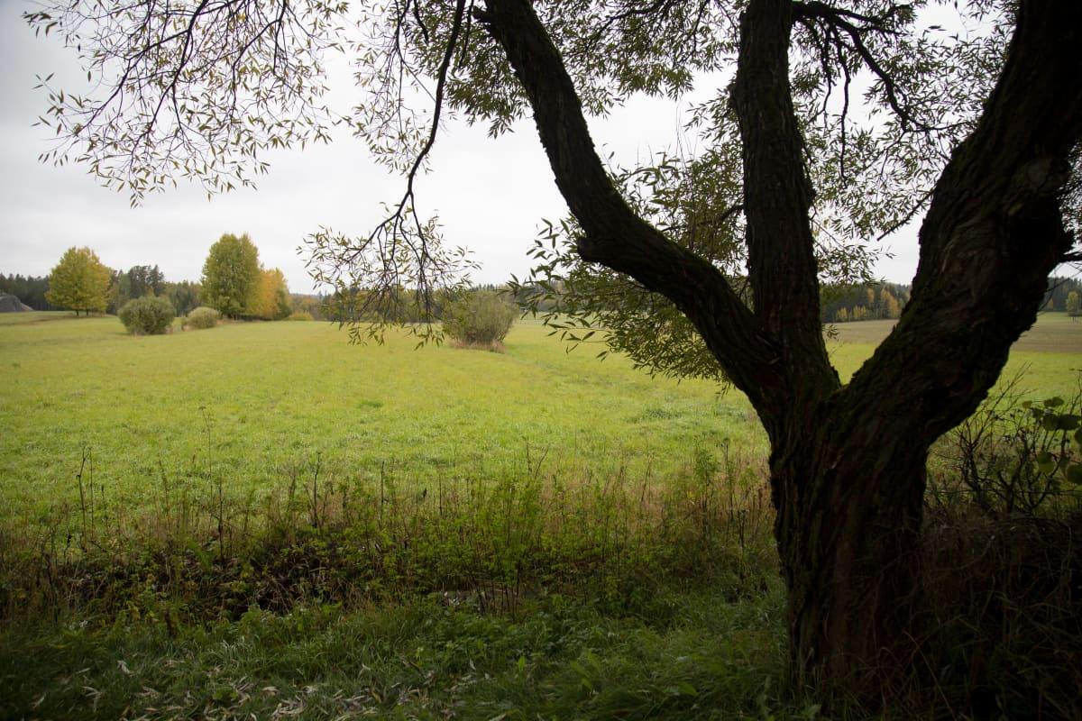 Nurmijärven Aittakallion ateljeesta avautuu näkymät pelloille ja lähimetsiin.
