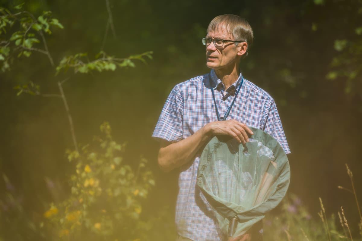 Dosentti Jari Haimi pitelee perhoshaavia käsissään ja tarkkailee hyönteisiä.