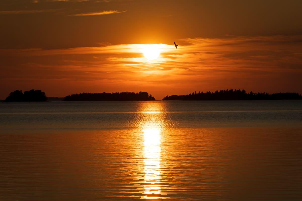 Lokki lentää auringonlaskussa merellä.
