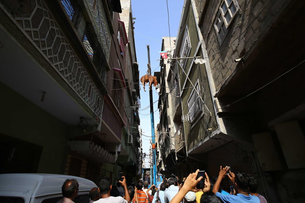 Ihmisjoukko kuvaa kännyköillä nosturin korkealle nostamaa eläintä.