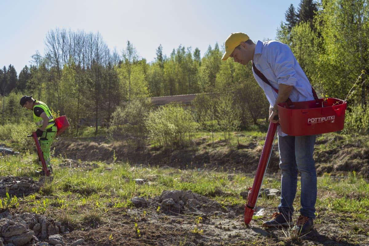 Puuni Oy tieteellinen johtaja Juha Siitonen istuttamassa taimia