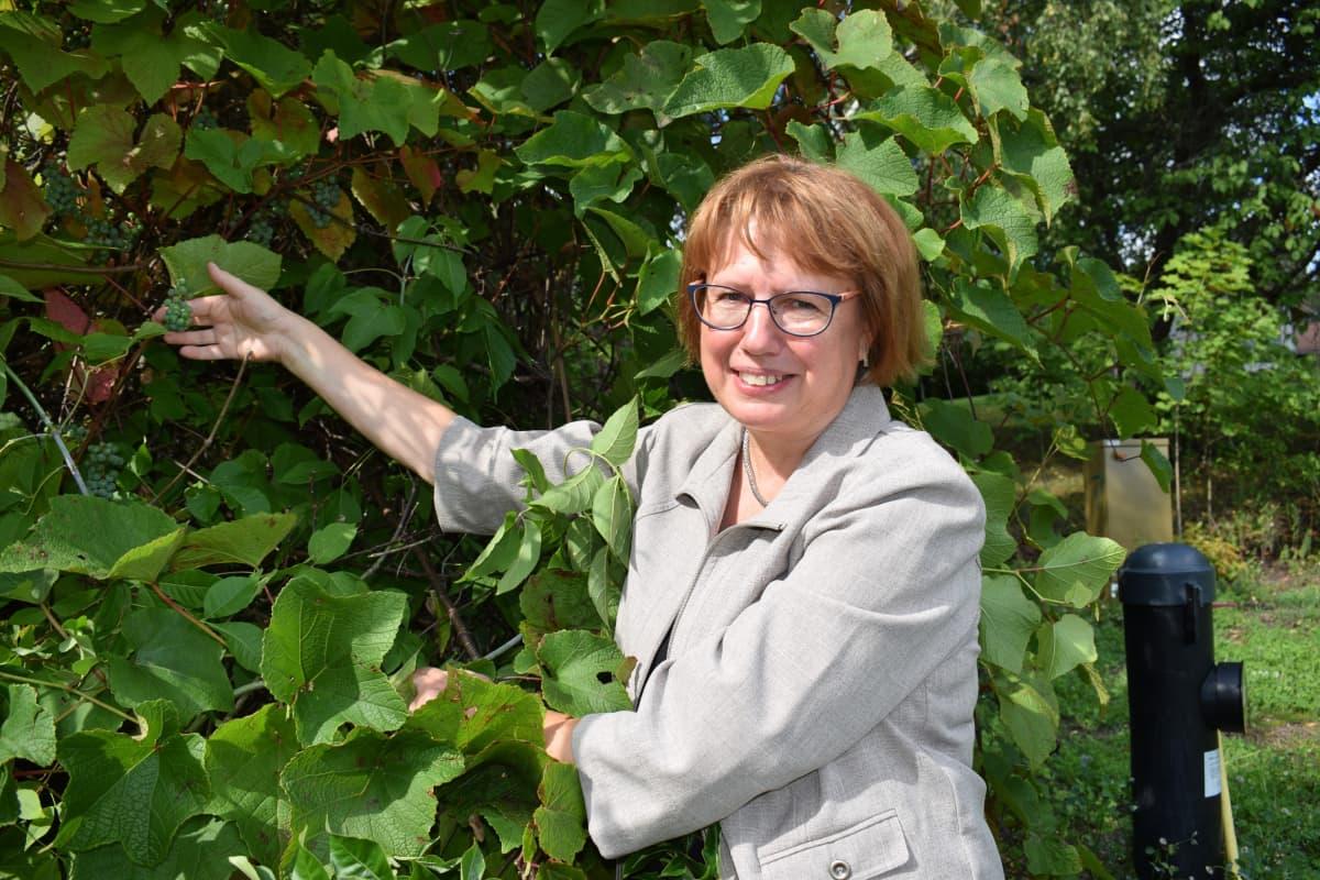 Tutkimusprofessori Saila Karhu esittelee viiniköynnöstä.