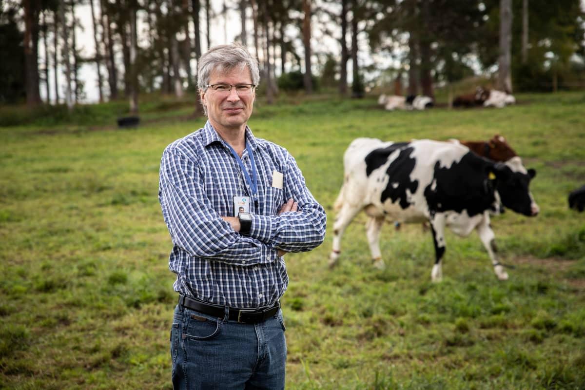 Luken johtava tutkija Perttu Virkajärvi Maaningan tilan laitumella.