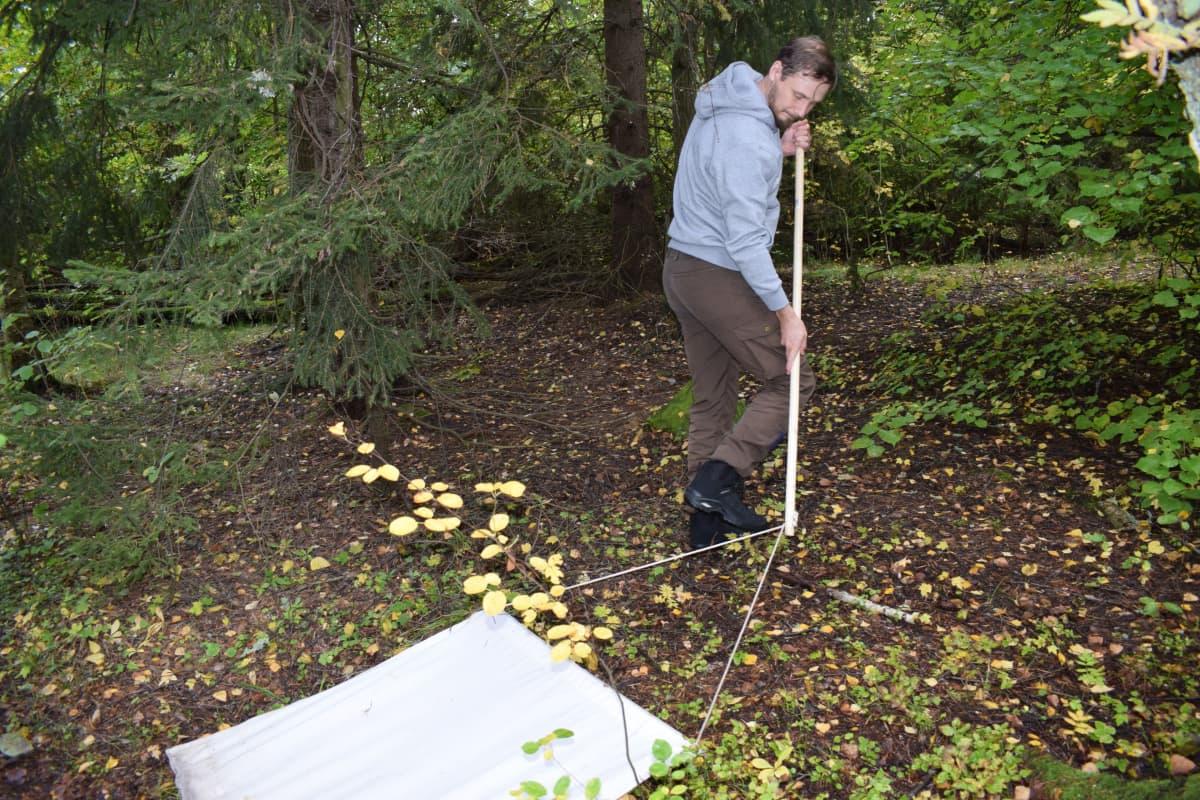 Tutkijatohtori Jani Sormunen vetää lakanaa Ruissalon maastossa