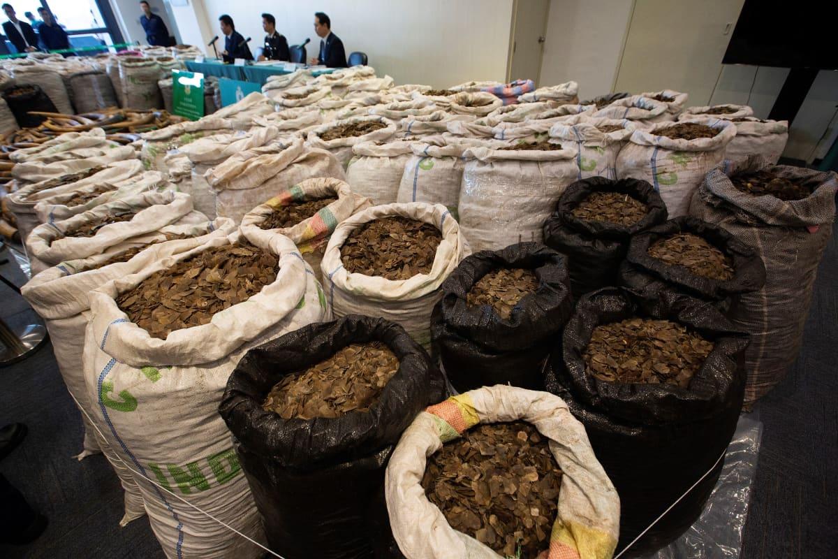 Honkongin tulli takavarikoi norsun syöksyhampaita ja muurahaiskävyn suomuja. Kuva helmikuulta 2019.