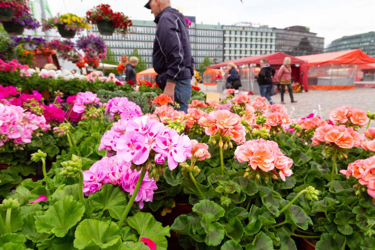 Kukkia torikojuissa Hakaniemen torilla.