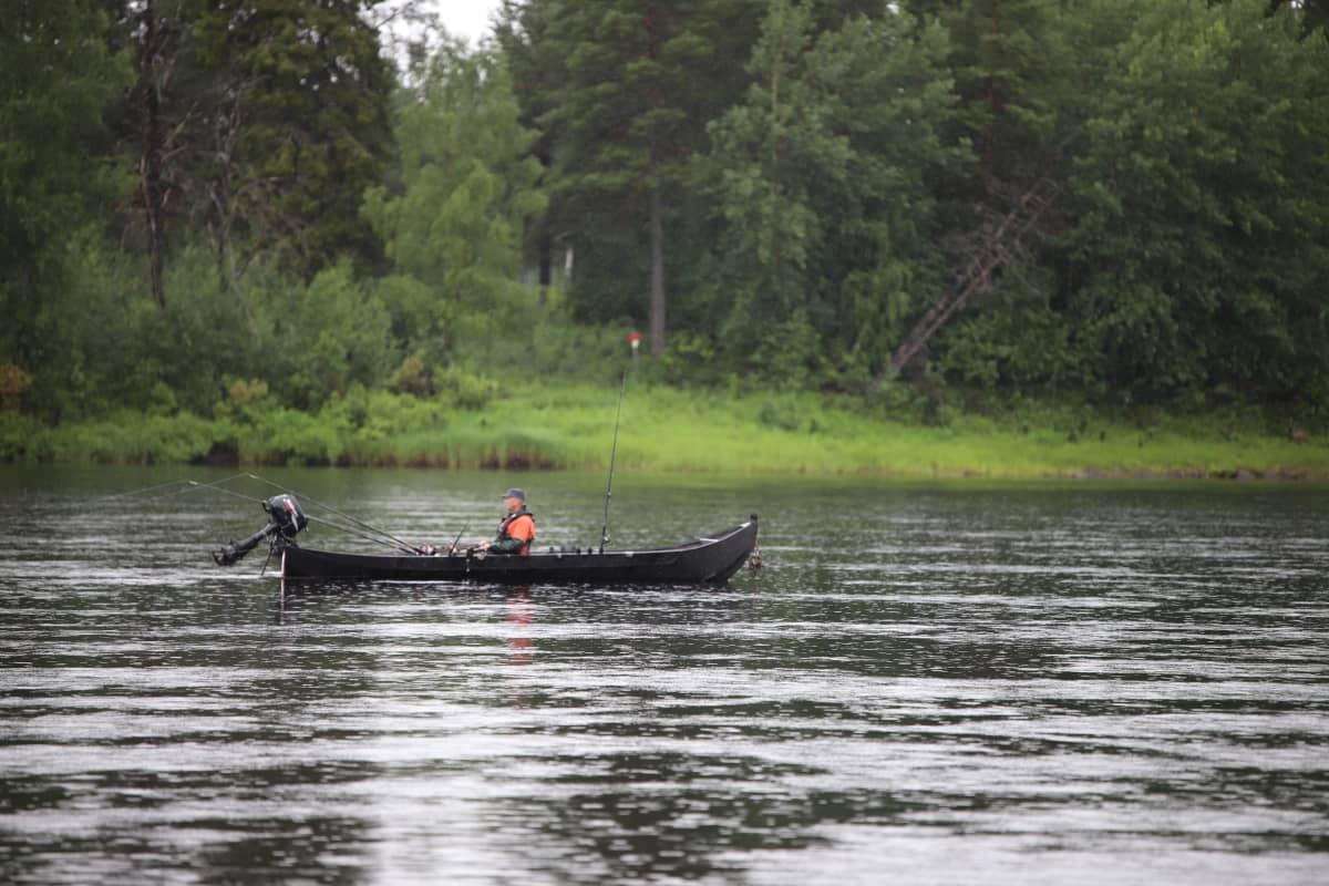 Tornionjoen-Muonionjoen vesistö on Itämeren vaelluslohen ainoita vielä säilyneitä lisääntymisalueita. Kalastaja Muonionjoella heinäkuussa 2020.