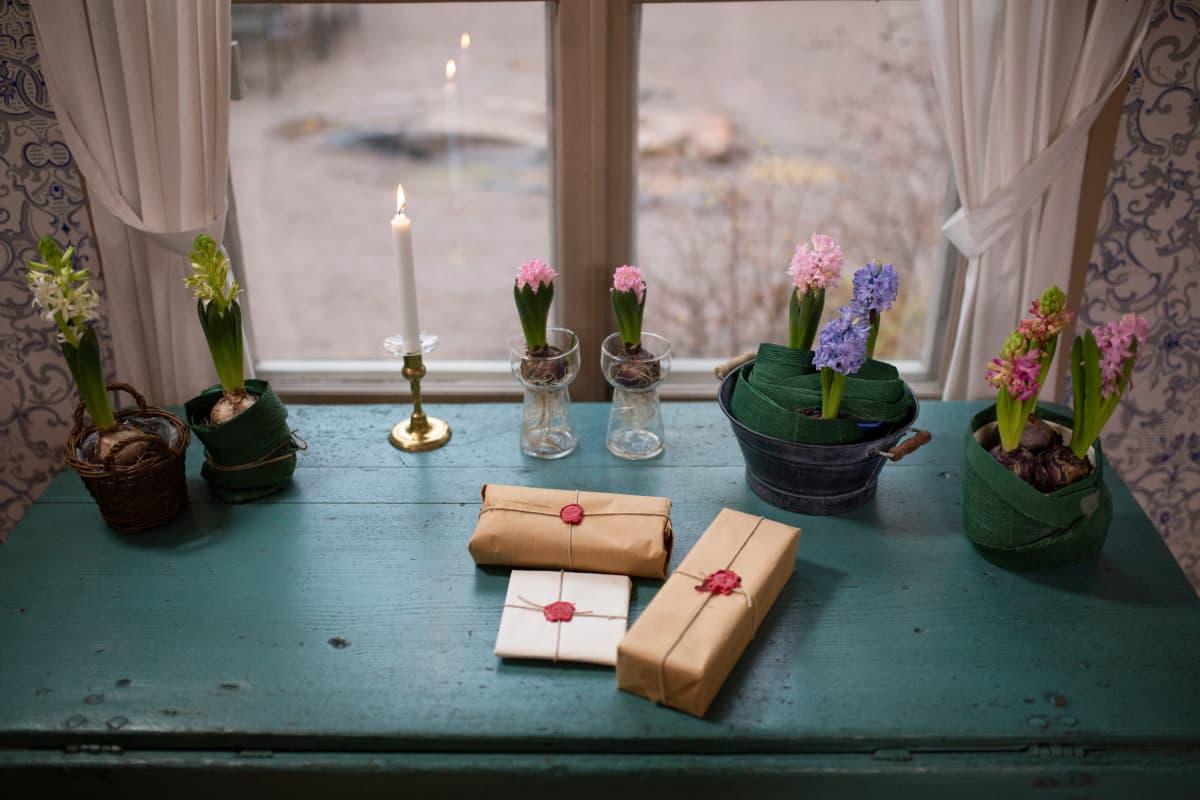 Vanhanaikaisella kirjoituspöydällä hyasintteja ja lahjapaketteja.