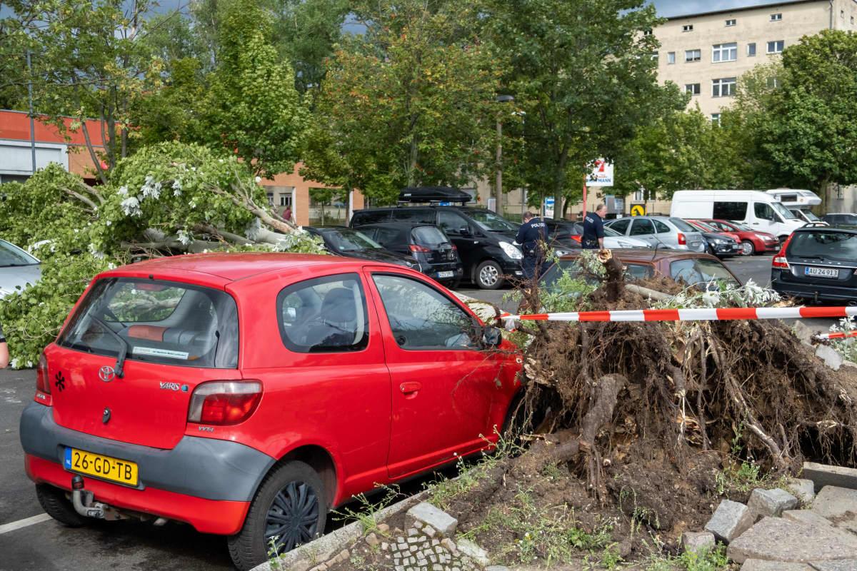 Kaatunut puu auton päällä Berliinissä