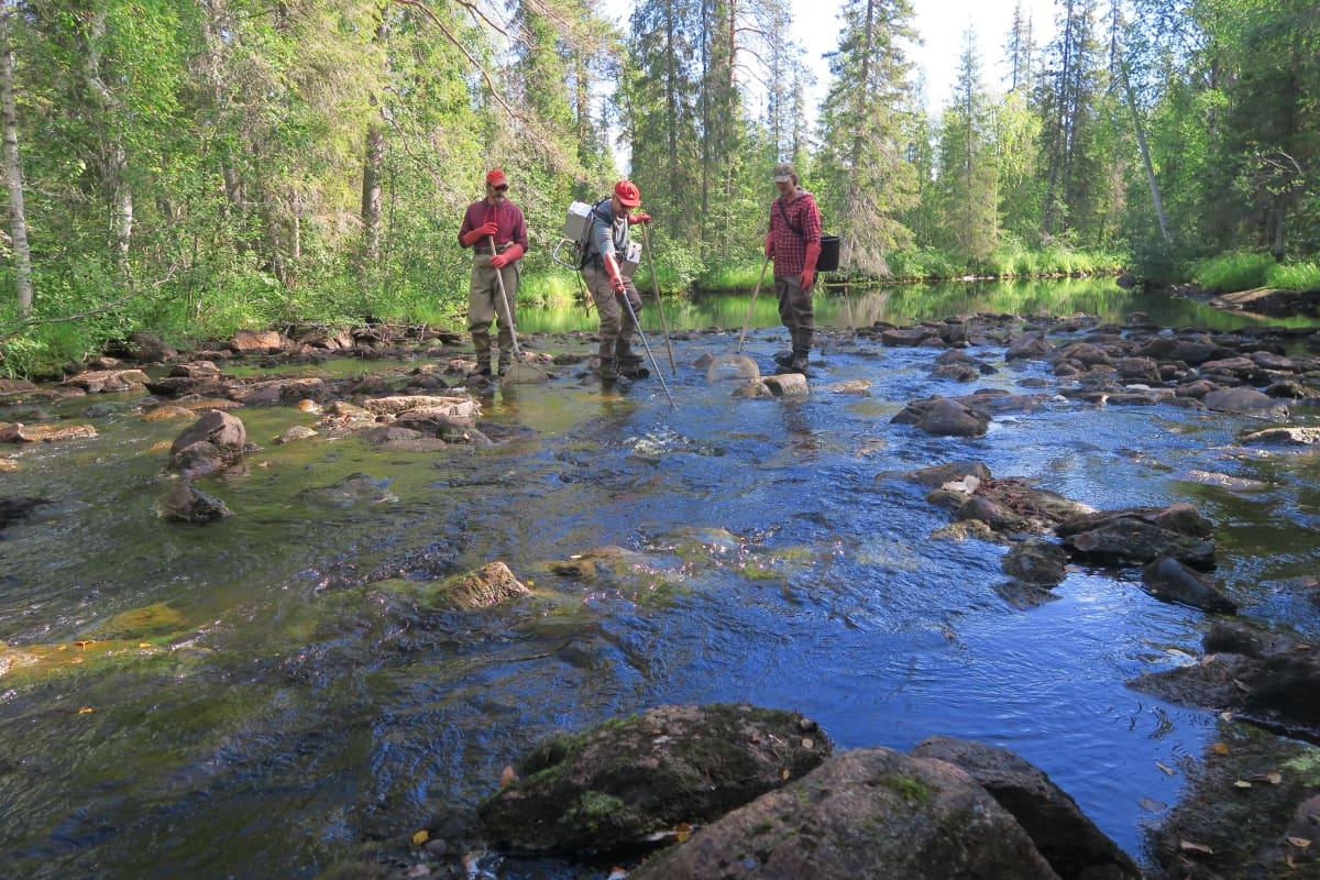 Oliver Toivanen, Sihveri Ervasti ja Petro Ruotanen tutkivat Rovaniemen Vaattunkijoen kalastoa sähkökoekalastamalla.