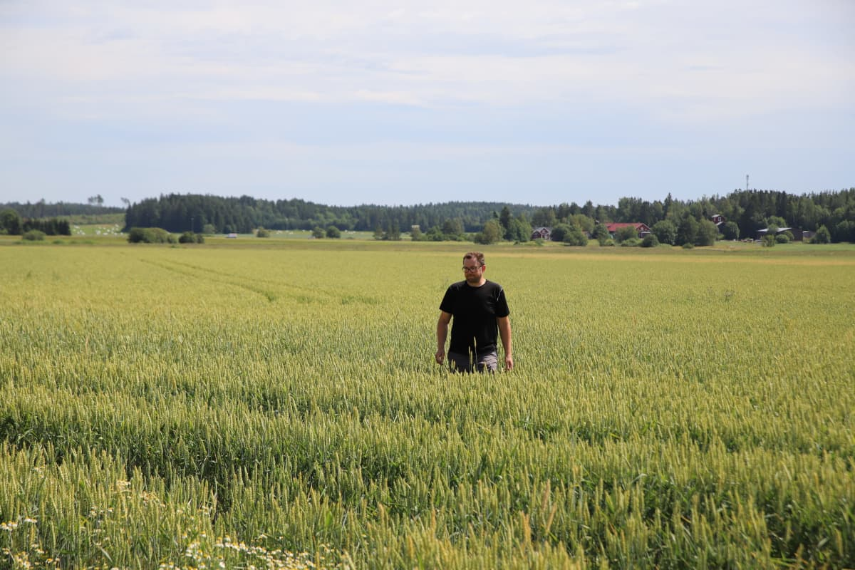 Mies pellallolla katsoo viljoja