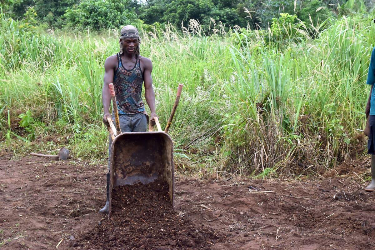 nuori mies kaataa kottikärryistä kompostia pellolle
