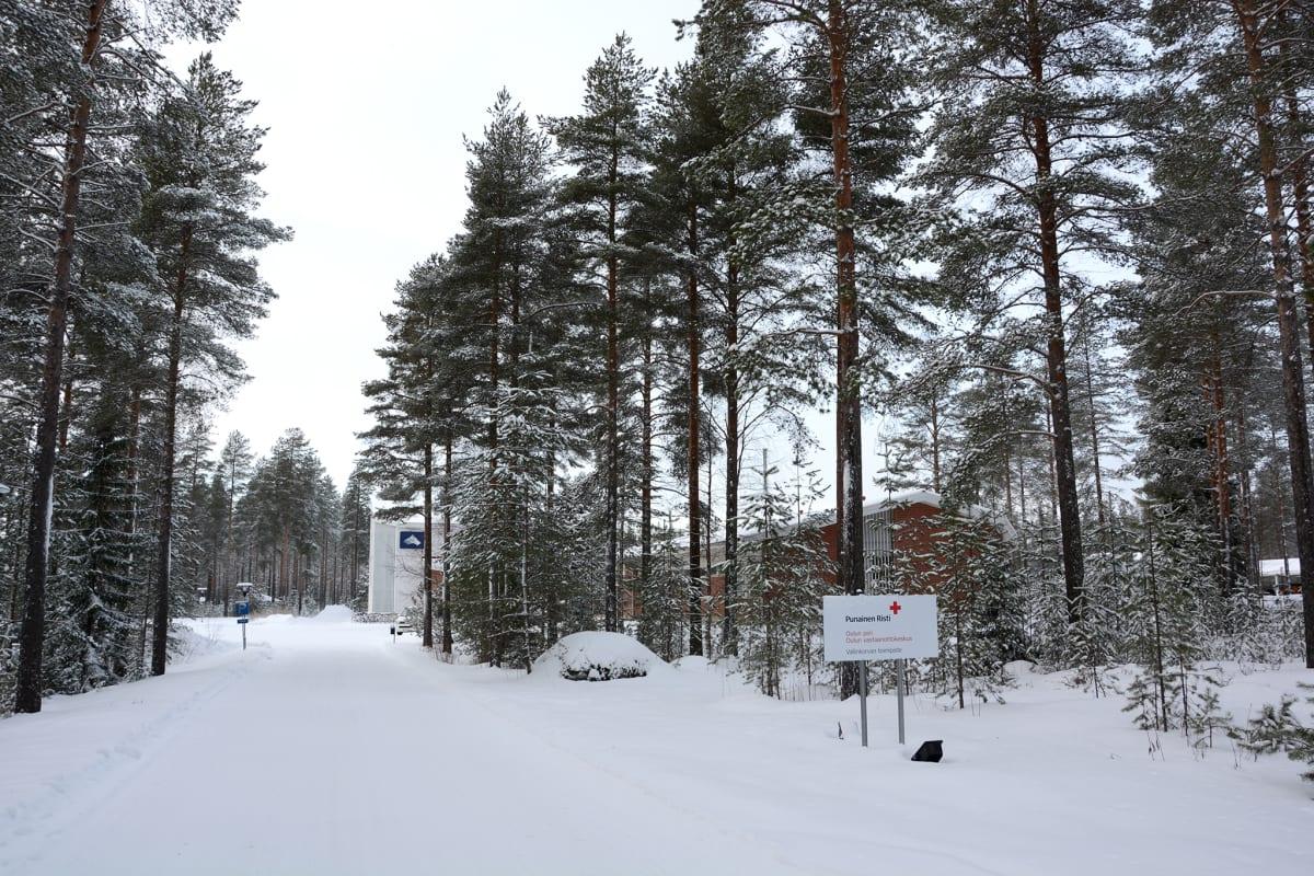 Oulun Vallinkorvan koulurakennus mäntypuiden takana talvella.