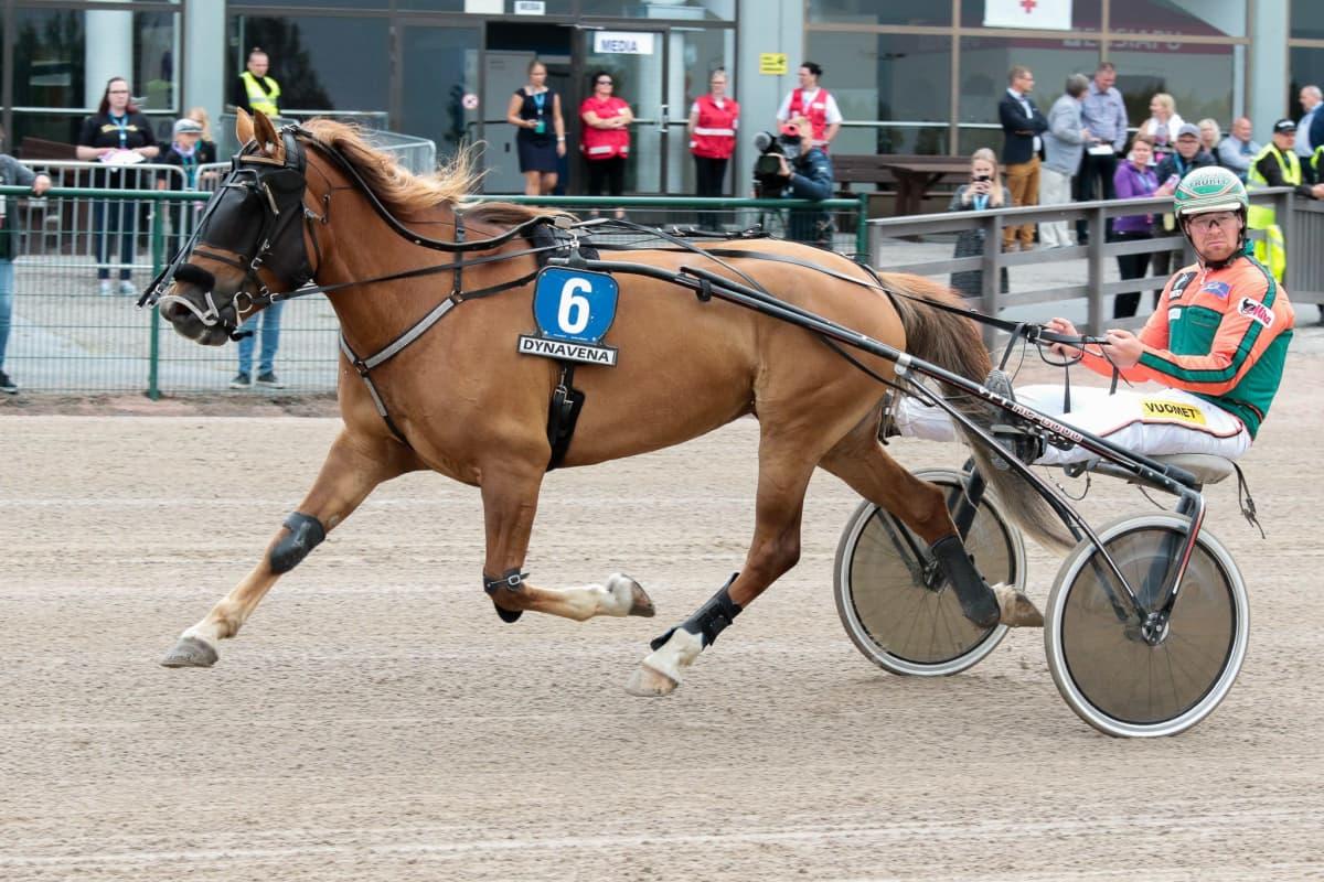 Hetviina kuuluu tammakilpailun suurimpiin suosikkeihin. Rattailla Antti Tupamäki.