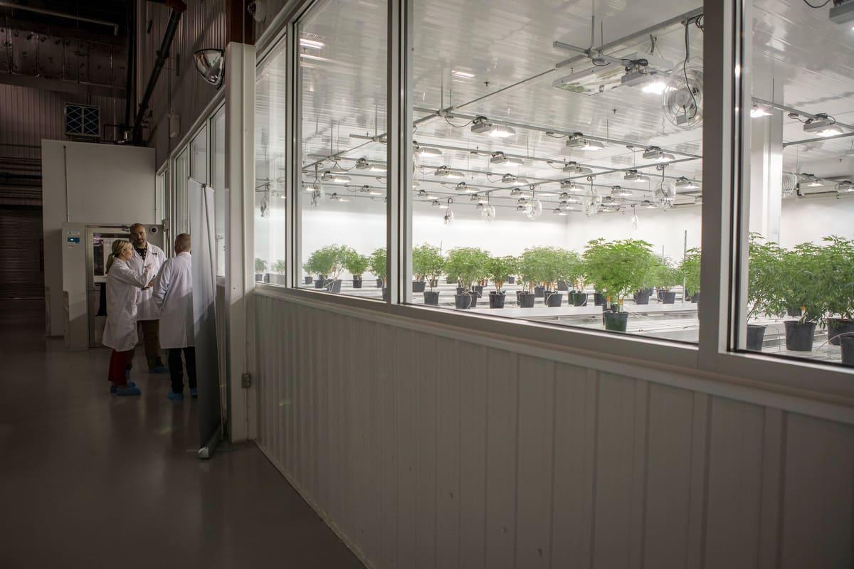 Smiths Falls, Ontario, Canada. July 23, 2019. Canopy Growth Corporation kasvattaa kannabista ja tekee kannabistuotteita Tweed-brandille.