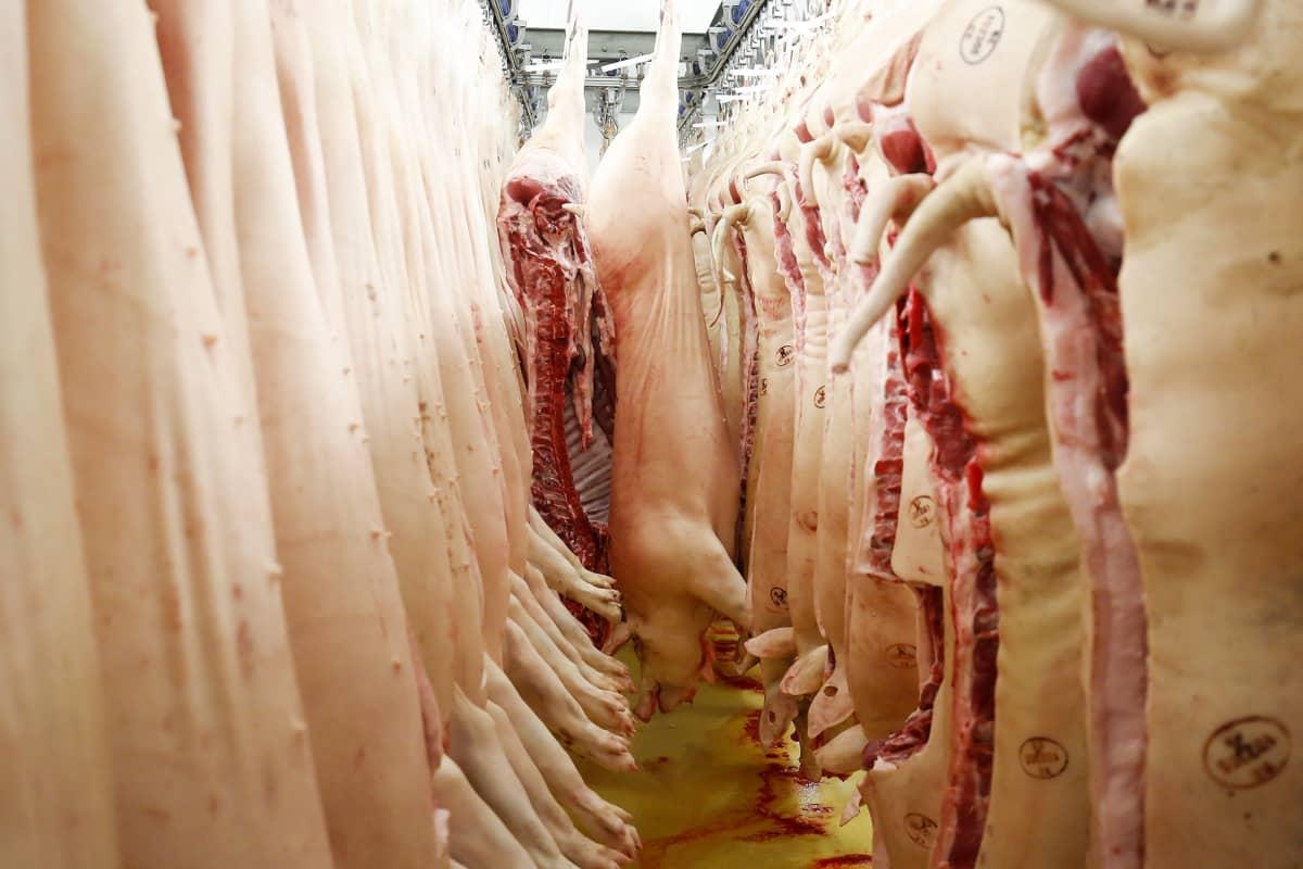 Sianlihaa teurastamossa Belgiassa.