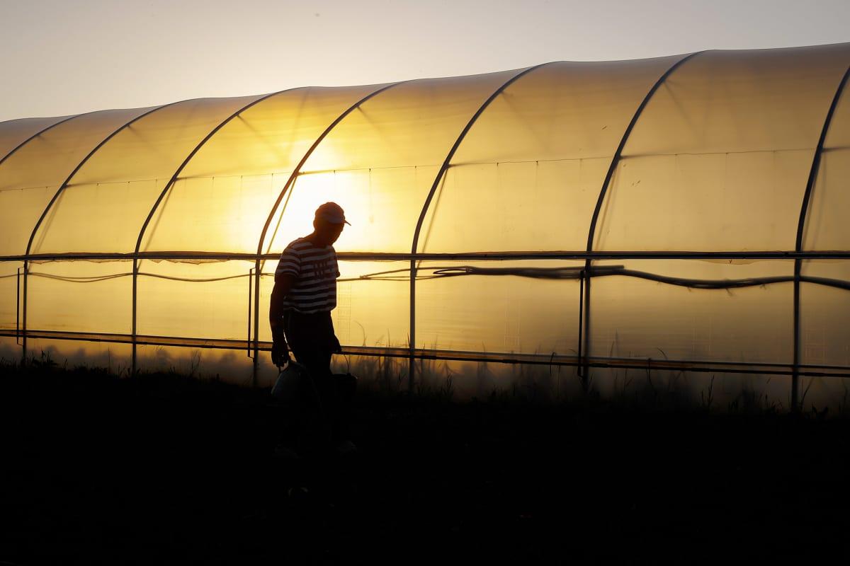 Maanviljelijä työskentelee kasvihuoneessa Kosovossa.