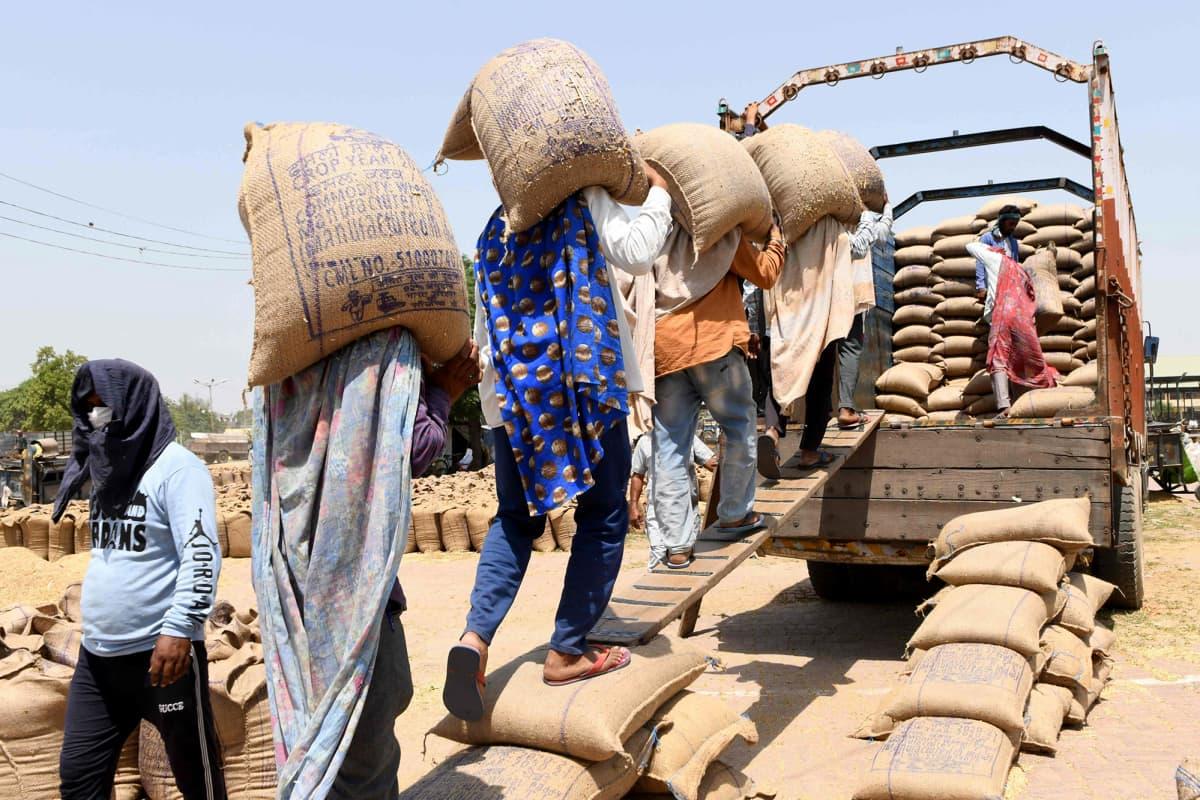 Työntekijät kantavat viljasäkkejä Amritsarissa.
