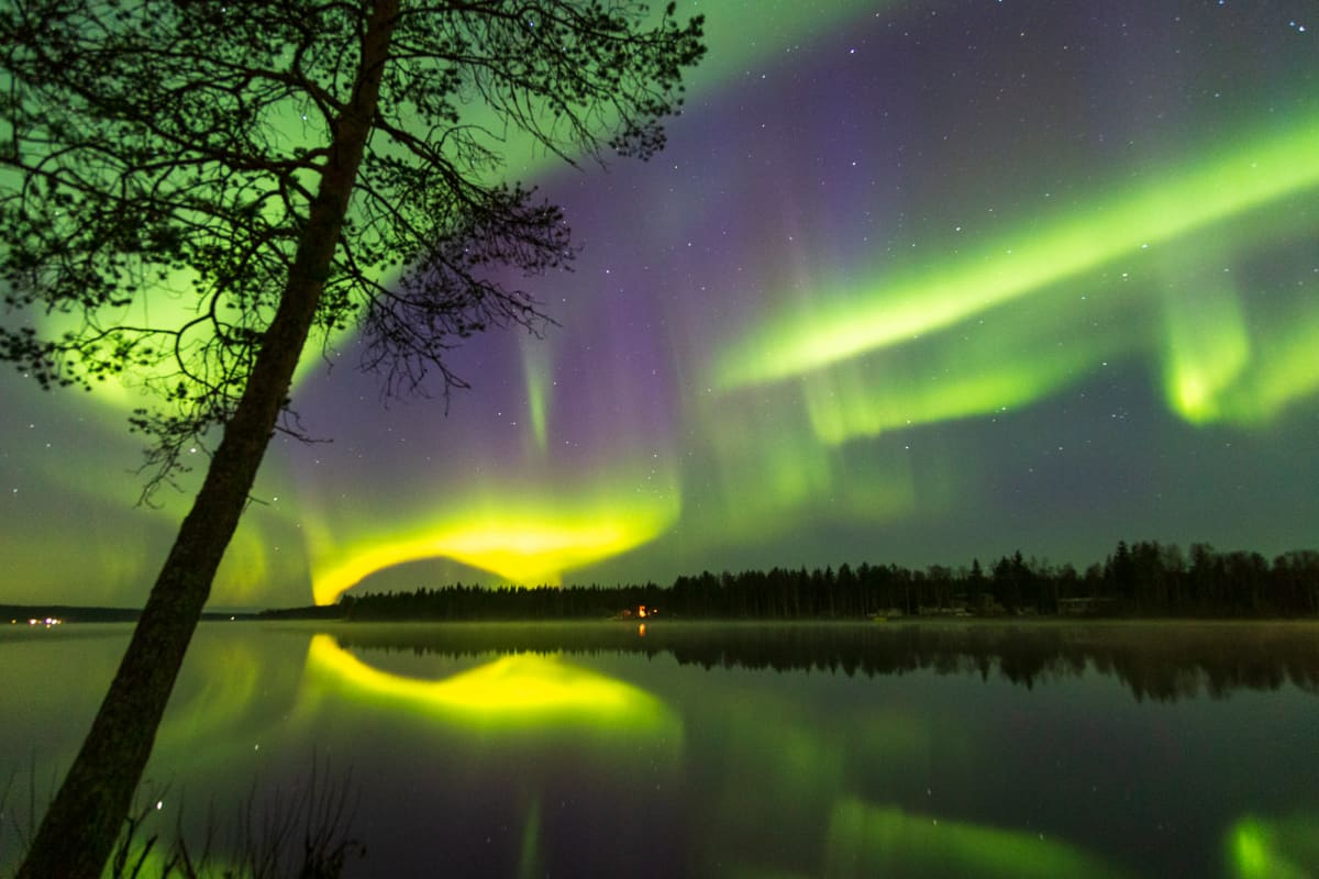 Suomen ihastuttavin puu -finalisti, Rovaniemen puu.