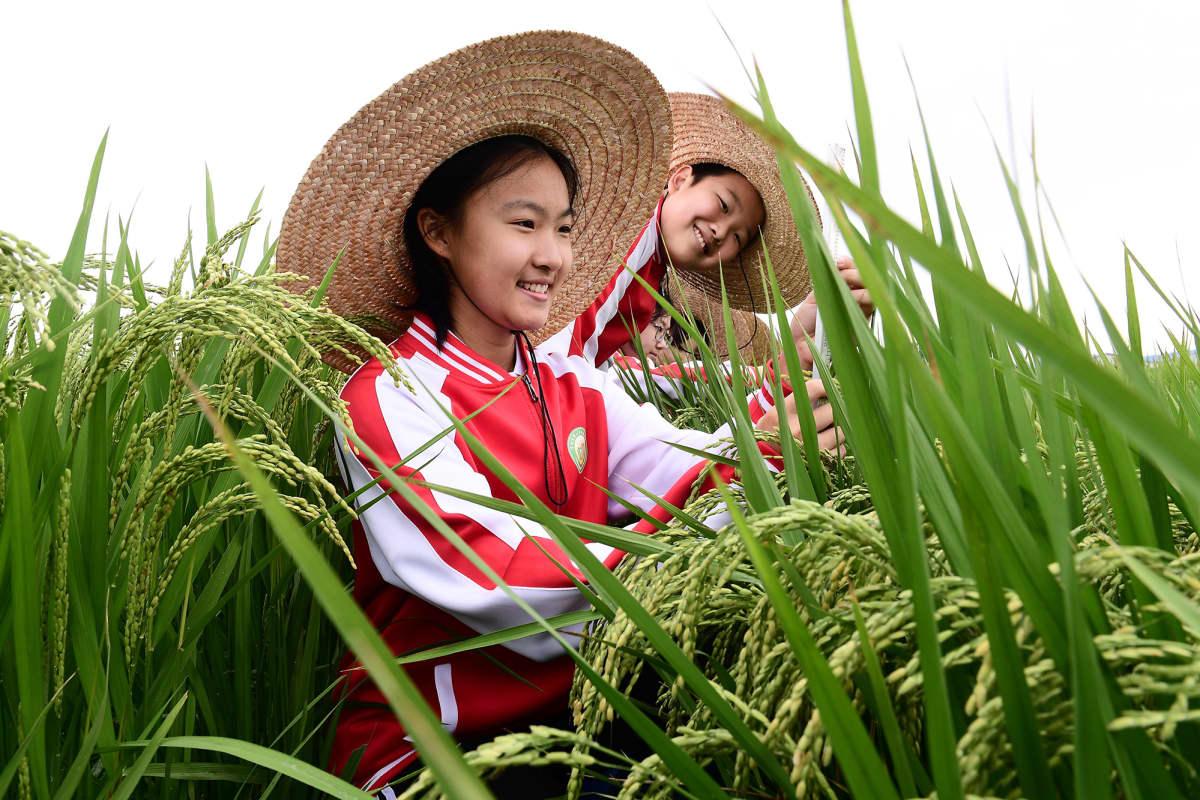 Koululaisia riisipellolla Kiinassa.