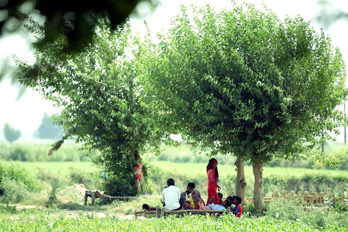Ihmisiä puun alla maaseudulla.