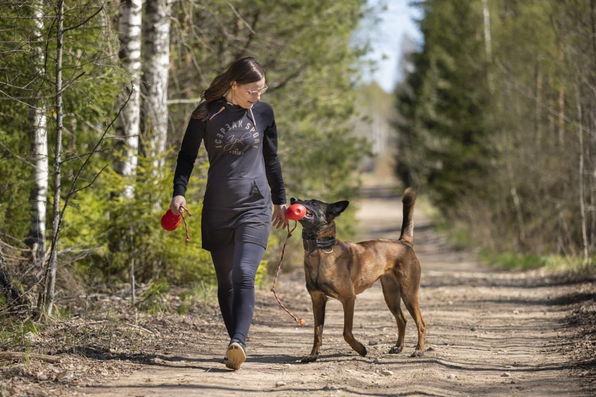 Tiina Kuusisto kävelee metsätiellä ja leikkii belgianpaimenkoiran kanssa.