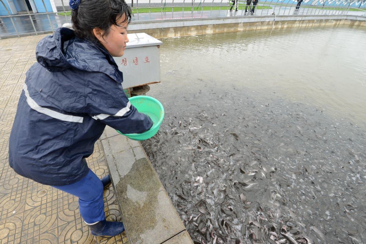 Kalan myyntihinta kattaa vain kolmanneksen tuotantokustannuksista.