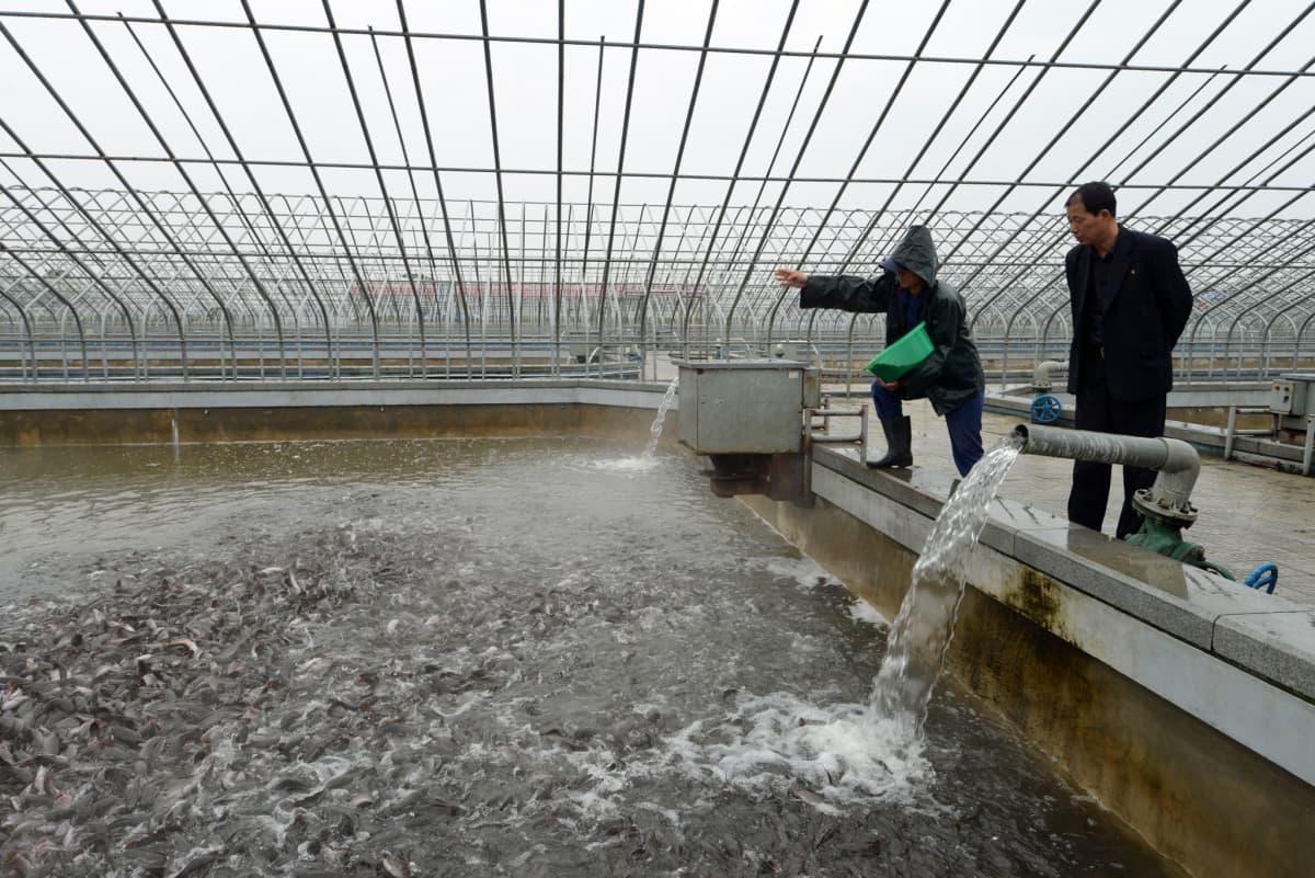 Pjongjangin kalanviljelylaitosta pidetään mallikelpoisena, ja siksi sitä voidaan näyttää myös ulkomaalaisille toimittajille.