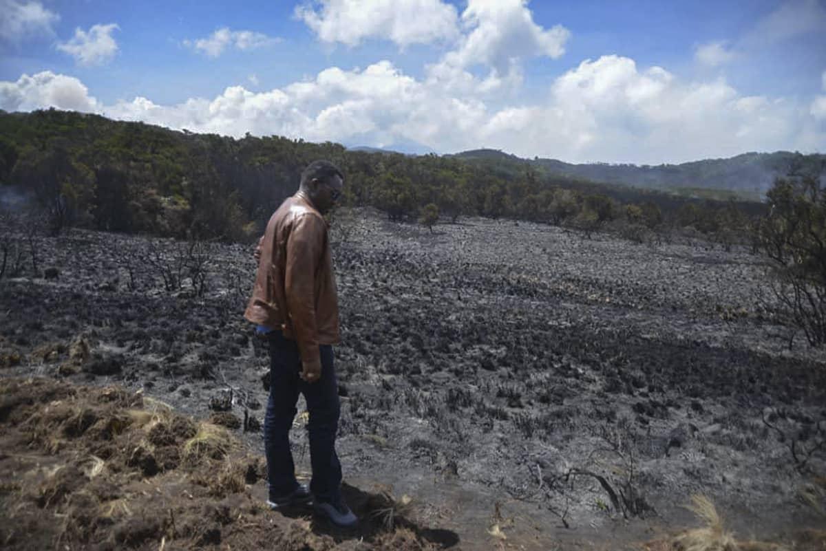 Palanutta metsää Kilimanjarolla Tansaniassa