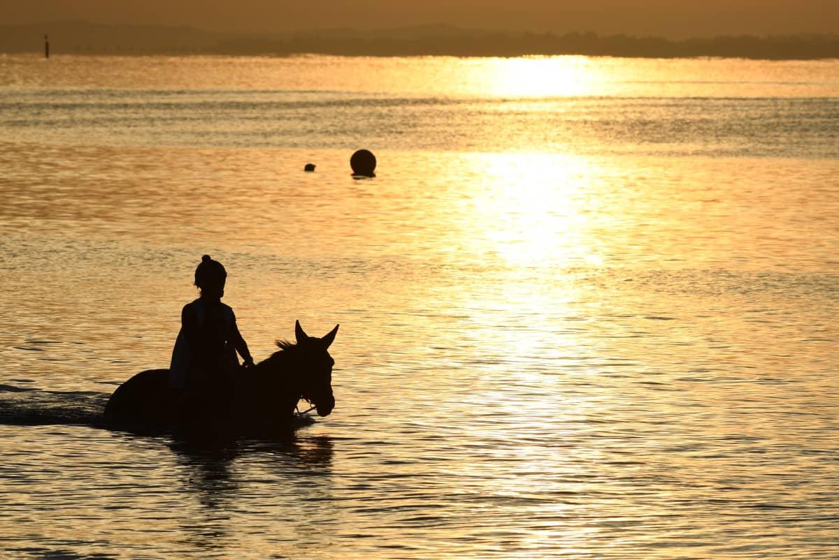 Hevonen ja ratsastaja vilvoittelevat rantavedessä Australiassa.