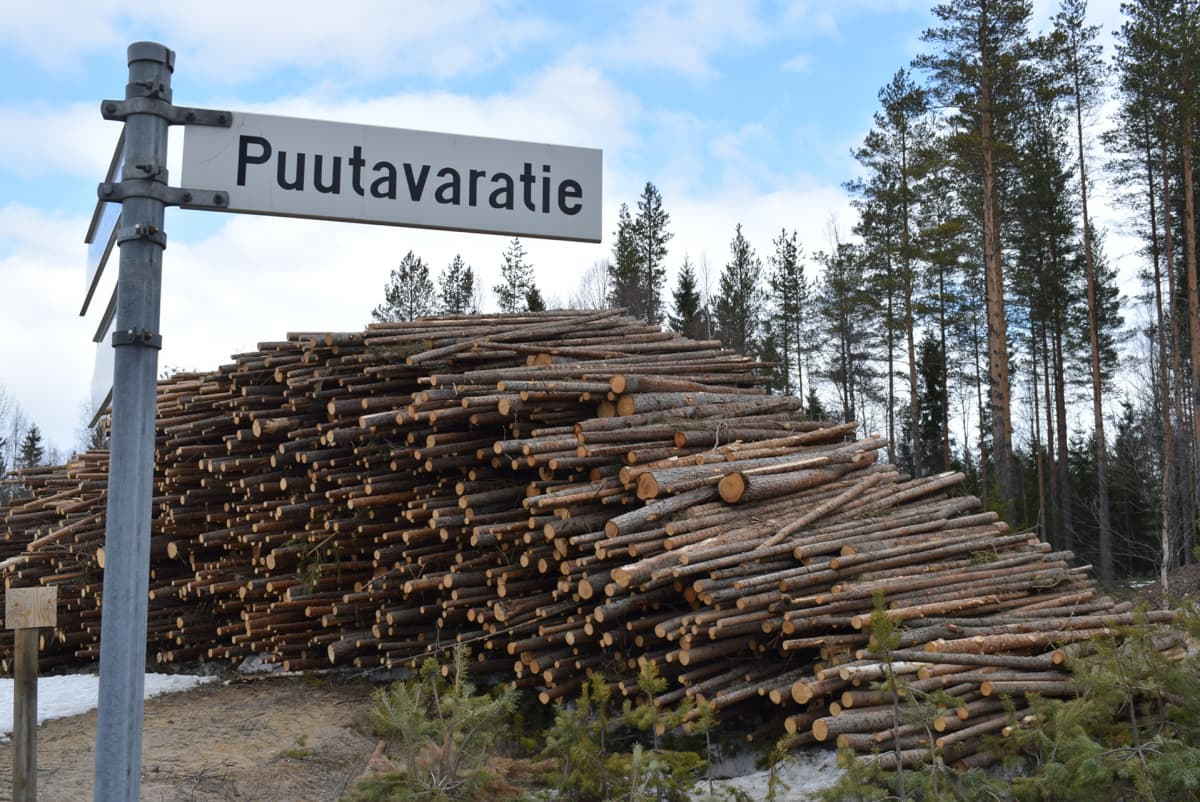 Metsä Metsähakkuut Kainuu Puutavarantie.