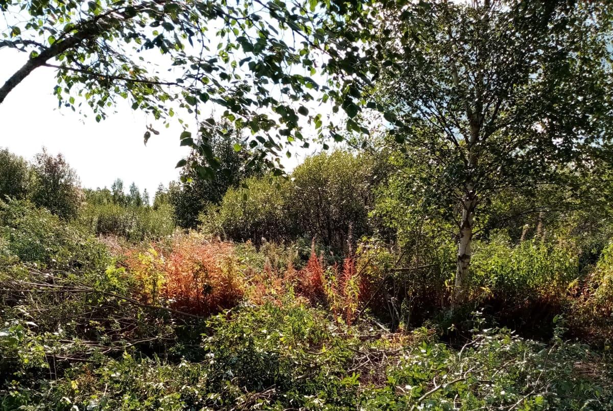 Kasvillisuuden valtaama pihanurkkaus