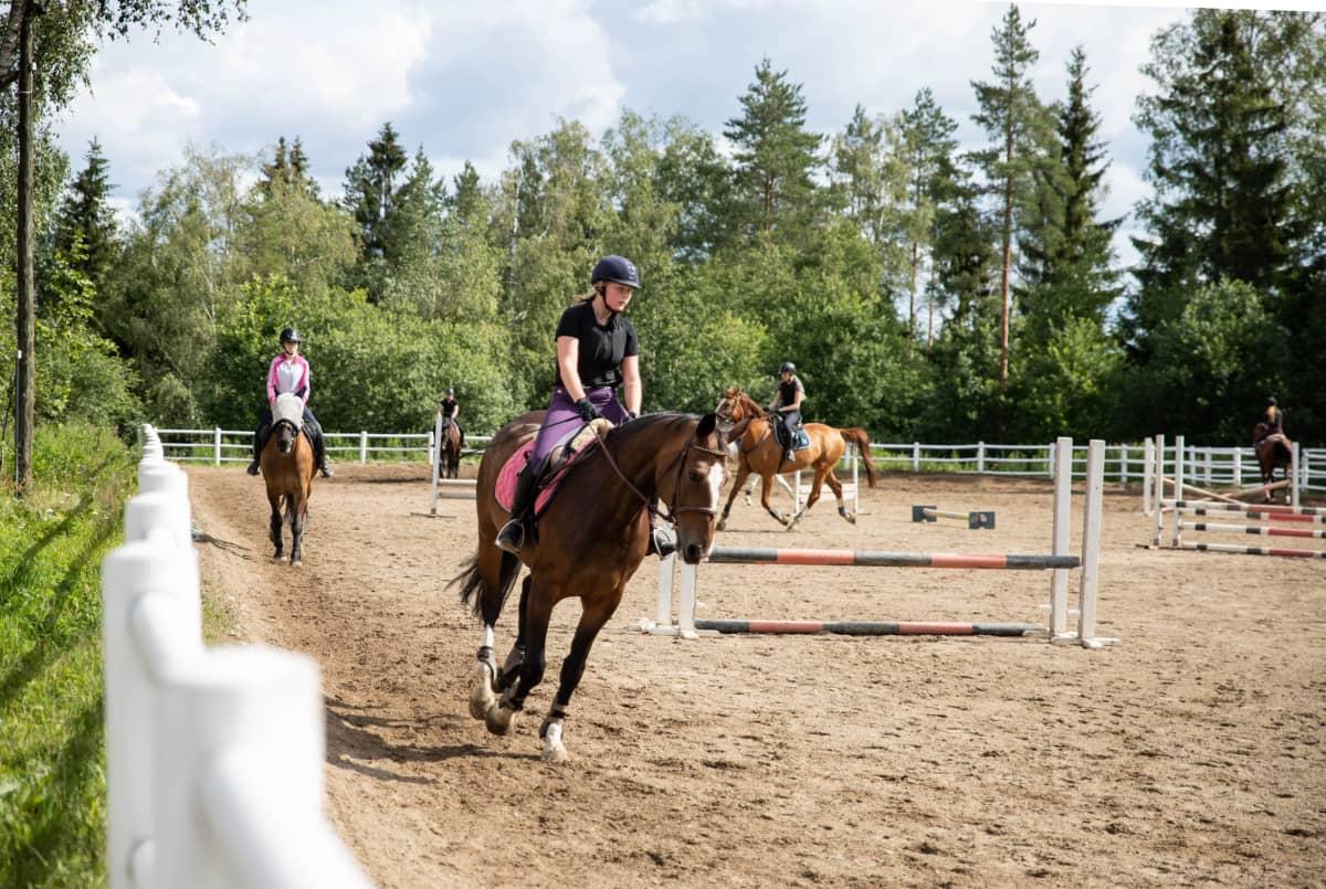 Hevoset laukkaavat ratsastuskentällä.