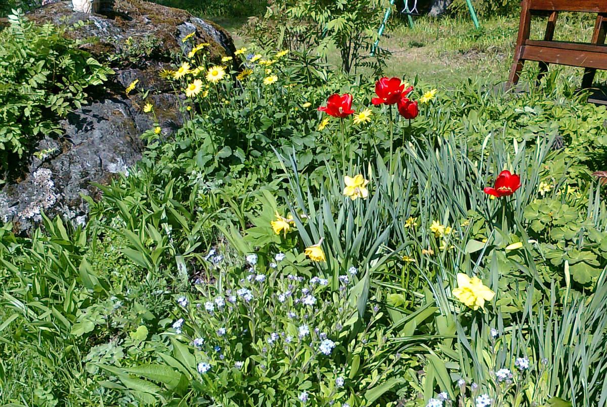 Kesämökin kukkapenkki oli Ulla-Marja Lehtoselle rakas. Hän halusi tuhkansa siroteltavaksi tälle paikalle.