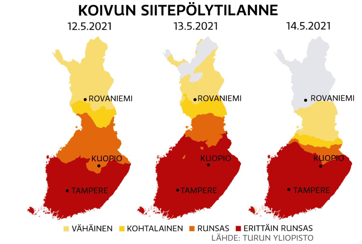 Koivun siitepölytilanne Suomessa 12.-14.5.2021