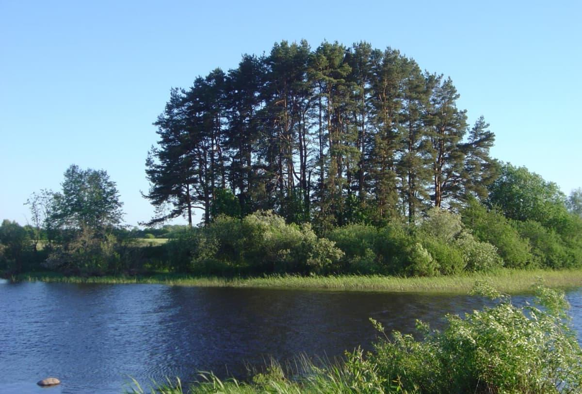 Puita ja pensaita joen varrella.