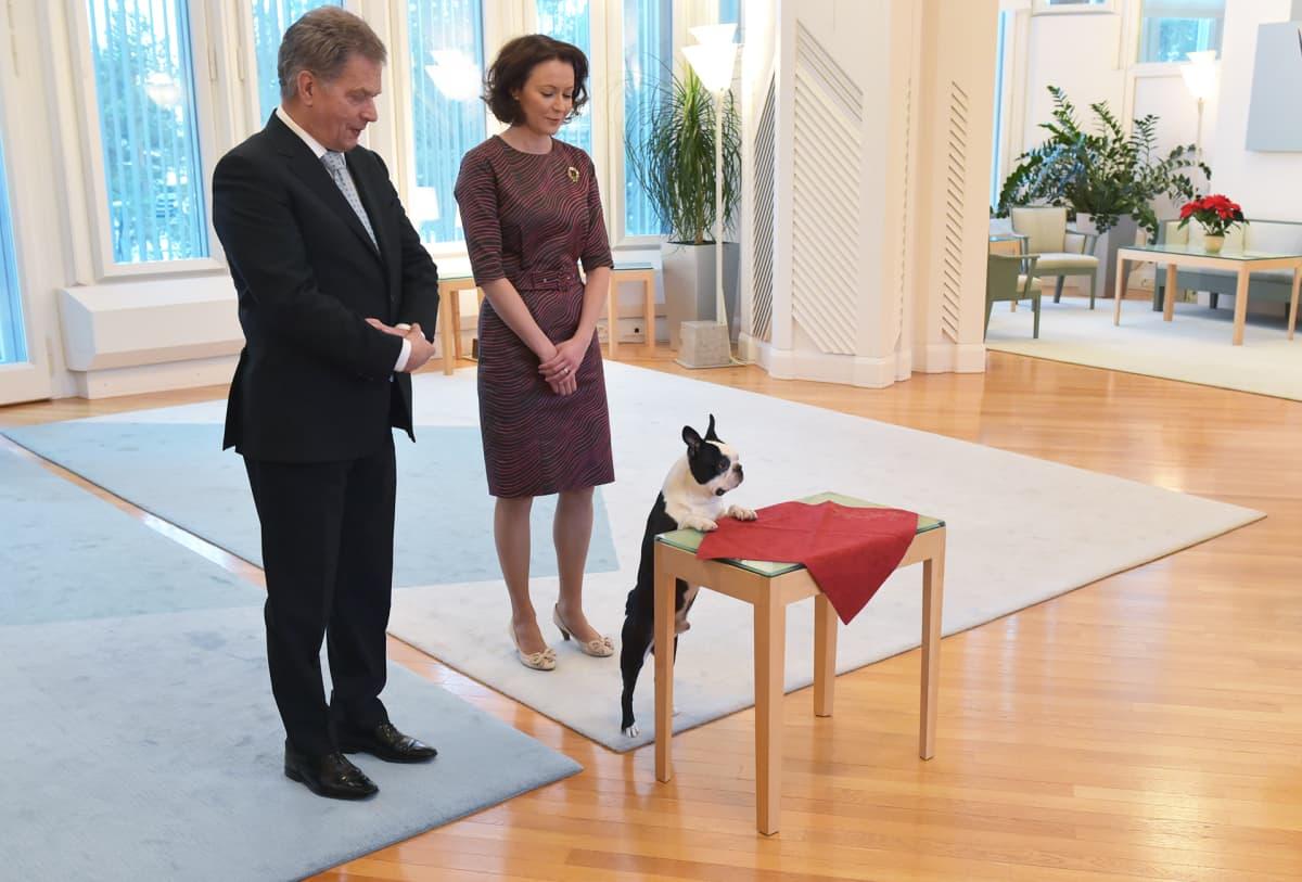 Presidentti Sauli Niinistö, rouva Jenni Haukio ja koira Lennu ottivat vastaan joulutervehdyksiä Mäntyniemessä 15. joulukuuta.