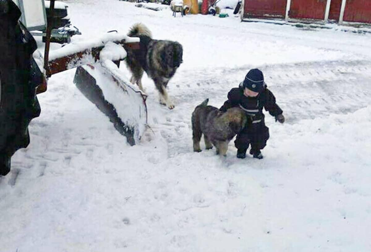 Poika ja kaksi koiraa.