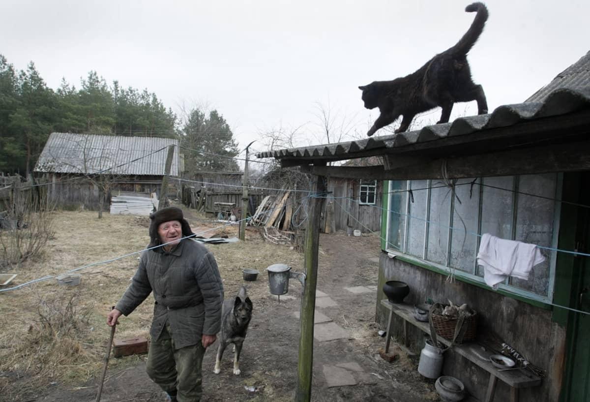 Vanha mies, jonka kintereillä kävelee koira, katselee katolla kiipeilevää kissaa.