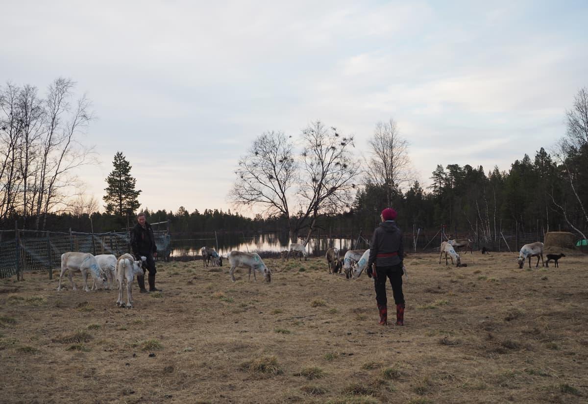Osmo ja Miina Seurujärvi .