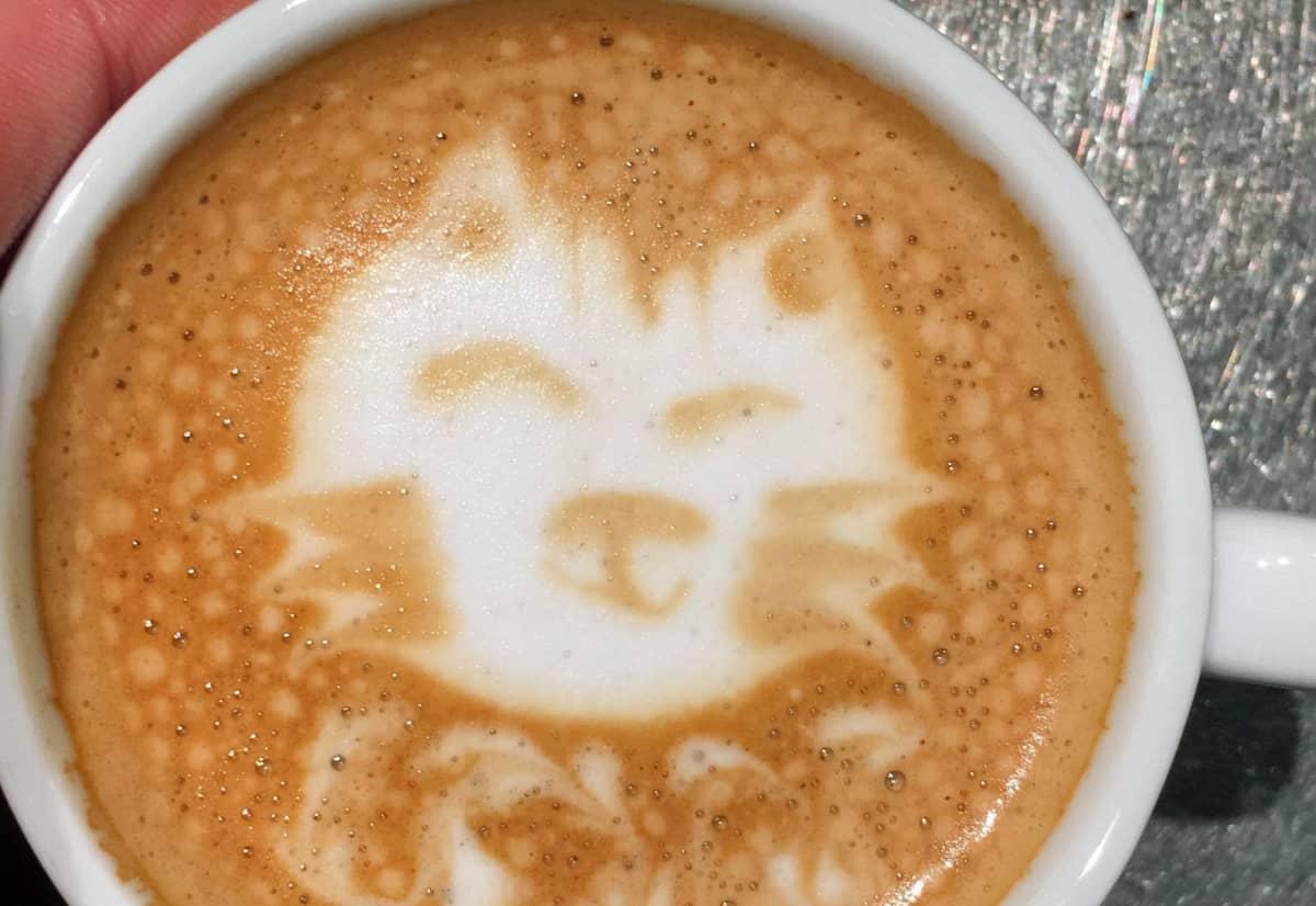 kissan kuva kahvissa