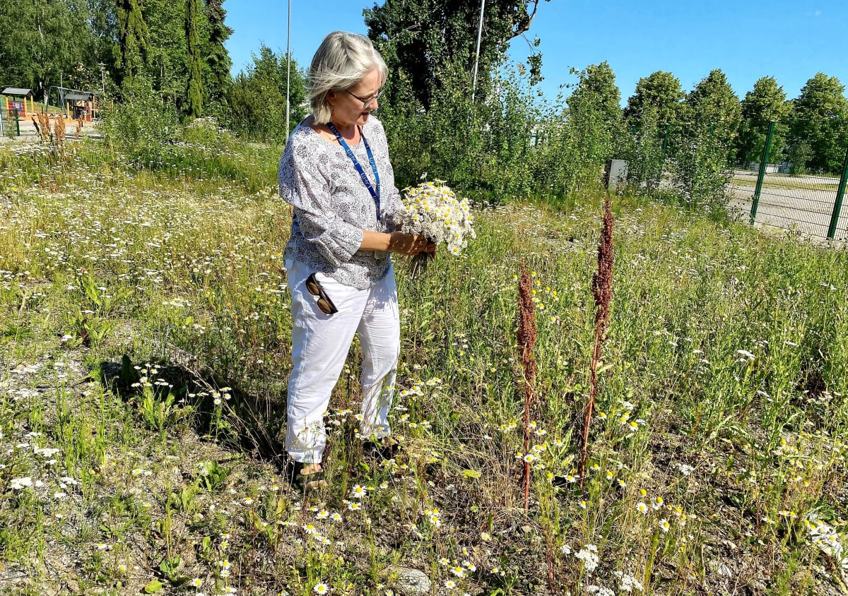 Kaupunginpuutarhuri Kirsi Kujala tarkastelee poimimaansa niittykukkakimppua. ia.