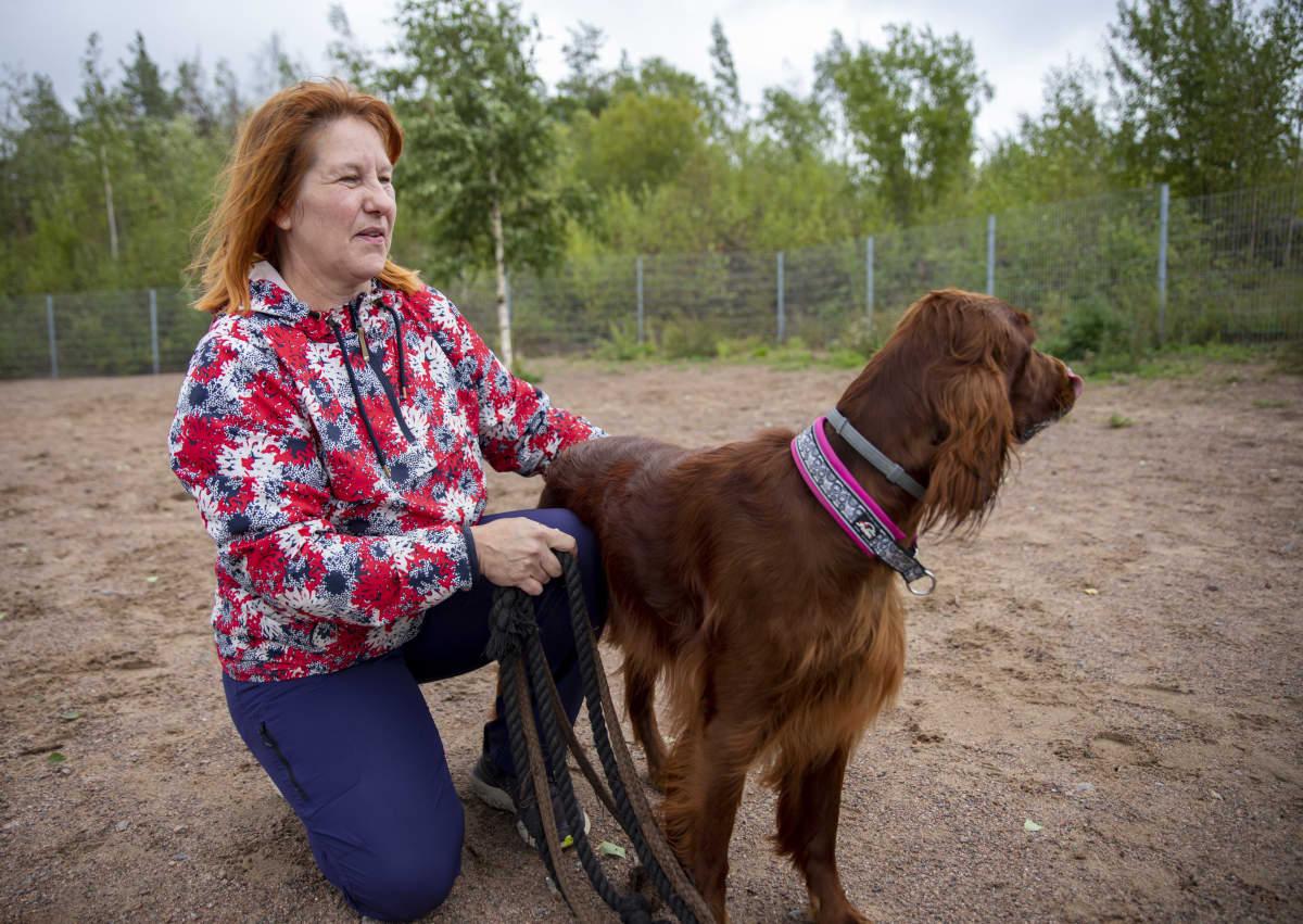 Tytti Huusko irlanninsetteri Tertun kanssa koirapuistossa.
