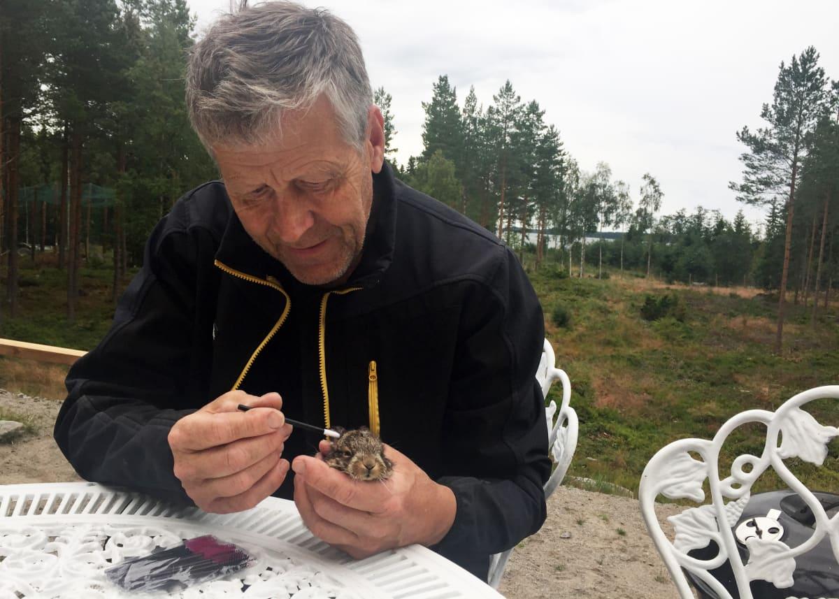 Markku Harju puhdistaa rusakonpoikasen päätä