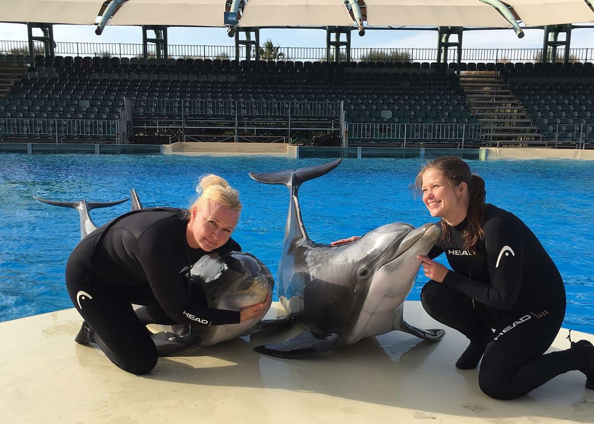 Kreikka delfiinit.